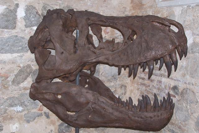 Dinosaurios Cultura Entretenida Con estos dibujos de dinosaurios podrás imprimir y pintar grandes animales que ya se han extinguido como el branquiosaurio, el velociraptor, el tiranosaurio o el diplodocus. cultura entretenida